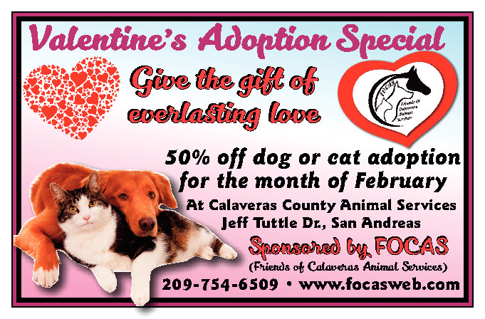 Valentine's Adoption Special!