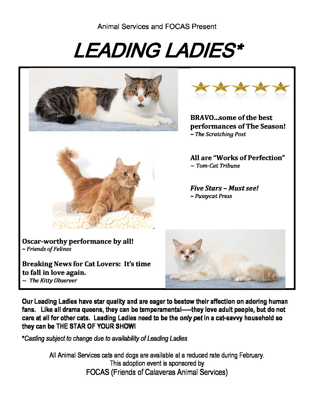Introducing Our Leading Ladies….        Available for Adoption!